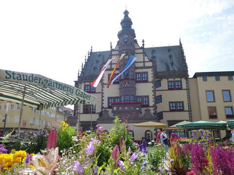 Markt vor dem Rathaus 2013