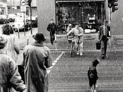 Schweinfurt im Regen - wieso pudelnass? Ich bin keine Pudel!