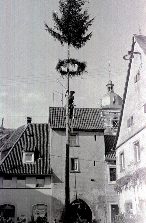 Der Baum wird aufgerichtet