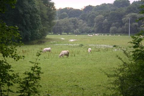 Schüttung verursacht sofort die Überschwemmung der Siechwiesen - 26.07.2017 W. Malek
