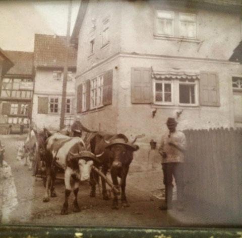 Kuh- oder Ochsengespann im Ortskern von Steinbach - Sammlung Martina Oschmann