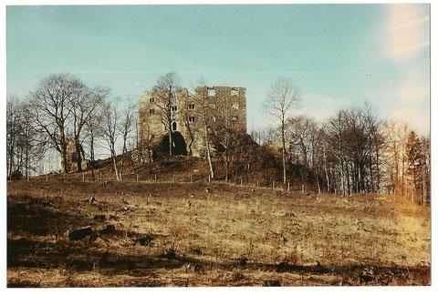 Gerade begonnene Aufforstung zwischen Burg und Triniusweg - 1950er Jahre - Archiv Werner Müller