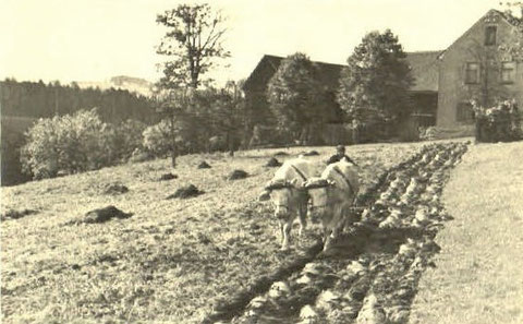 Ochsengespann Bad Liebenstein - rückseitig handschriftlich geschriebener Text