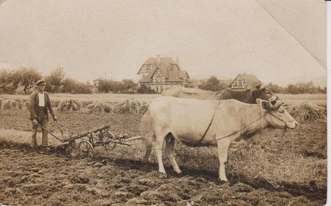 Haus der Perlets in Obermaßfeld mit Ochsenpflug von Dr.H.Frank