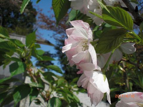 花の中にまた花びらが