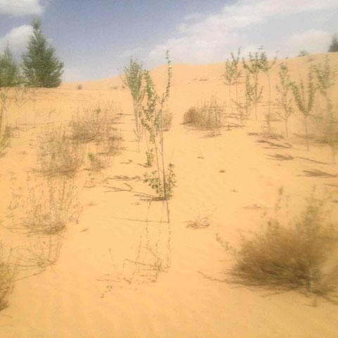 乾燥に強いさまざまな植物を、どんな斜面にどう植えるのか、実験が繰り返されている