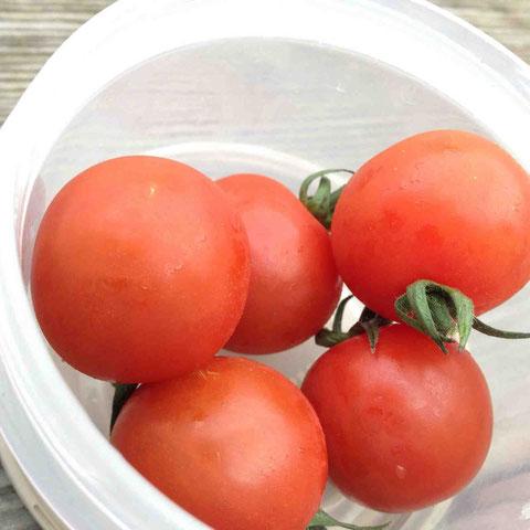 見晴らしのよいベンチでつまむミニトマトがおいしい