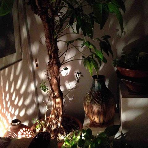 植物や、テリーさんが愛する沖縄のモノがたくさん