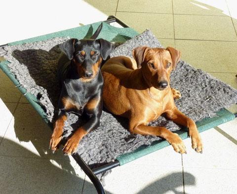 Geeva und Onnie beim Sonnenbaden, März 2011
