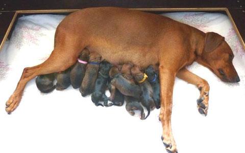 17.05.2011, Onnie und alle 10 Welpen kurz nach der Geburt !!