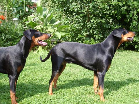 Geeva und Sally im Garten