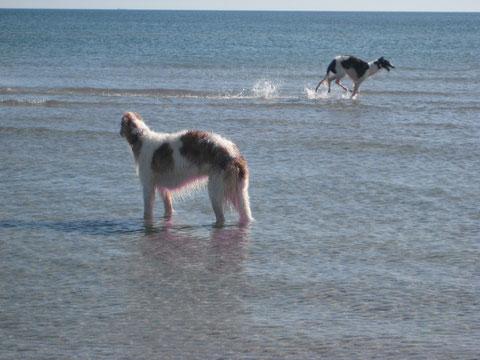 Sieh mal !!! Iveta kann auf dem Wasser laufen !!