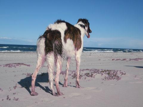 Iveta an einem endlos langen Strand in Dänemark