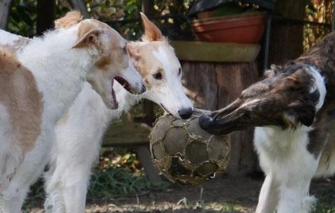"""Wer sagt denn eigentlich, dass kein Fußball mehr """"übertragen"""" wird !"""