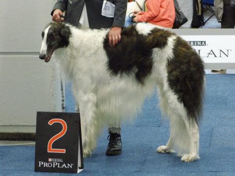 Orpheus in der Siegerklasse mit V2 ResCACIB