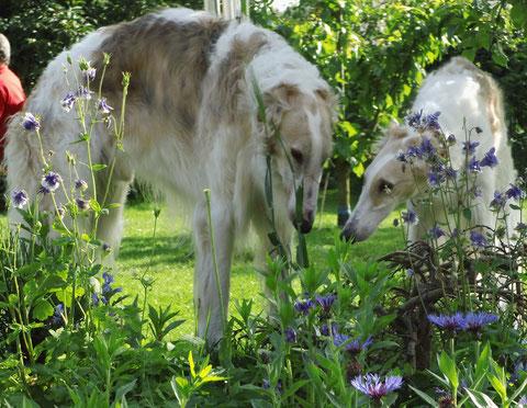 Ishim und Izora bewundern die Blütenpracht