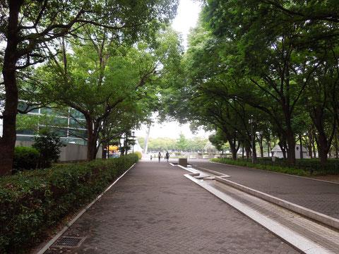葉が繁って鬱蒼として見える白川公園入口