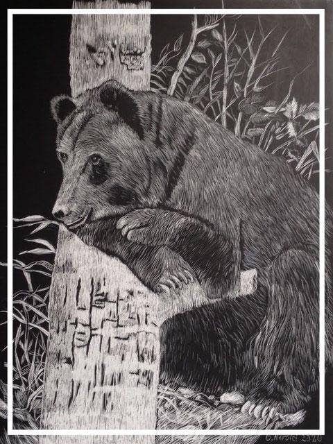 Goliath der Bär (ausgesetzt 1978, Aufgenommen im Bärenpark Wörbis)