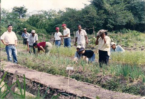 """Campesinos asociados de la cooperativa agropecuaria San Pablo """"COOAGROSAN"""", laborando en la parcela demostrativa cultivo de hortalizas, bajo la supervisión del Ing. Jorge Molina, instructor SENA"""