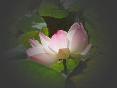 Samen und Blüte des Lotus sind Eins.
