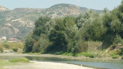 Eine Riese-Fischsenke am Fluss