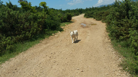 Auf dem Weg zu unserem SUV (Shatterhands unbekanntes Vehikel), lief uns noch ein Coyote über den Weg.