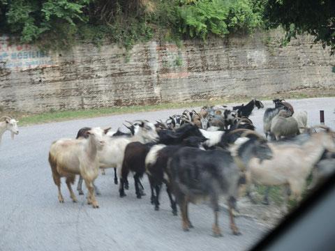 Neben Kühen, Eseln, Pferden, Hunden, Opas, Schlafen... immer wieder Ziegen...