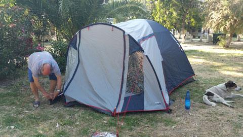 Zelt noch nicht unter Palma ausgebaut, aber schon auf den Hund gekommen...