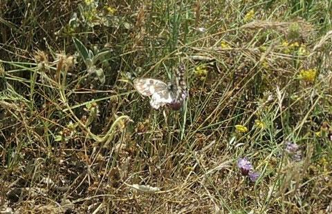 Diesen Schmetterling kenne ich auch nicht...