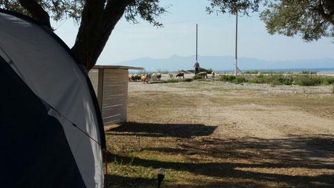 Unser Zeltplatz in Borsh mit Blick auf Schafe und Meer
