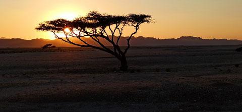 Krönender Abschluss - Sonnenuntergang in der Wüste. Anschließend noch läppische 1,5 Stunden mit 60 Sachen durch die Wüste und mit 120 über die Landstraße...