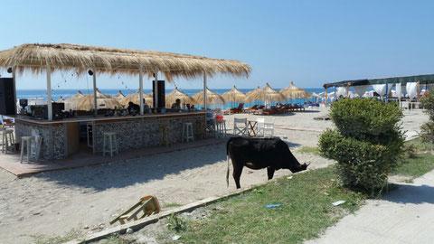 Strandbar mit Frischmilchtheke