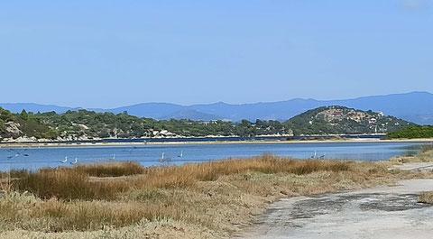 Die Livari Lagoon (1) mit den Graureihern