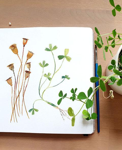 mohnkapseln, Aquarell, Mohn, Klee, malen lernen, Aquarell malen lernen, kostenlose Aquarellanleitung, wie man mit Aquarellfarben malt, wasserfarben, Blumen malen, botanische Aquarelle, florale Aquarelle, mityoudesignmemalenlernen, Aquarellkurs, Malkurs