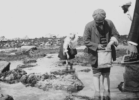 Chercheurs du laboratoire de biologie marine vers 1900 collectant à la grève (Collection Daniélou)
