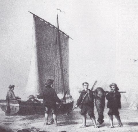 Au XIXème , en, baie de somme, la chasse au phoque était pratiquée par des bourgeois locaux et parisiens  comme une chasse sportive, des canots de plaisance à dérive  étaient spécifiquement utilisés pour cette chasse