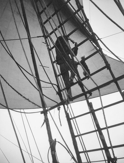 Le chat du bord , dans les haubans du quatre mâts barque allemand Pommern vers 1930