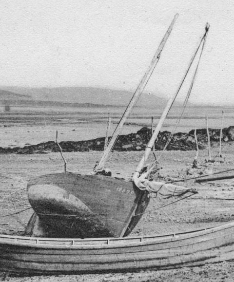 Une rare photo de flambart du Goélo dans l'anse de Poulafret à Kerity Paimpol.