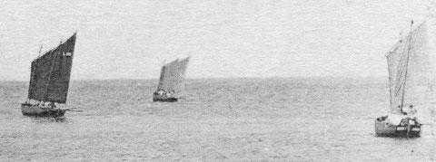 Le canot de Roscoff pris au large de l'île de Batz était probablement gréé de deux voiles au tiers comme ces petits flambarts de Ploumanac'h vers 1900