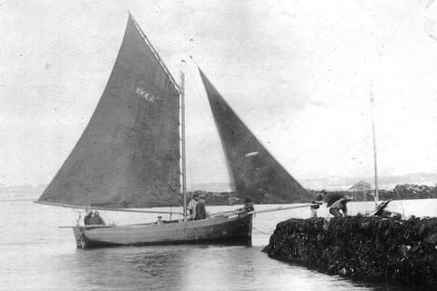 Un sloup immatriculé R1000, à l'époque ou Roscoff était un quartier maritime arrive à la cale nord du vil à Roscoff, un joli plan de voilure