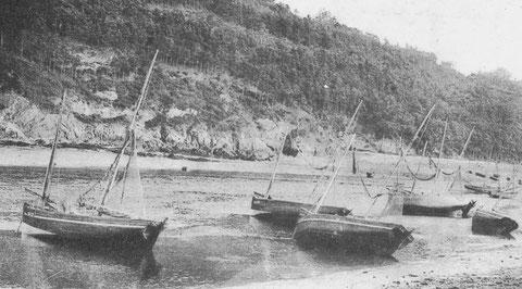 Cinq lougres à cul carré, le franc bord généreux leur permet aussi de se redresser facilement  à la marée montante, les bateaux ne peuvent béquiller sur la vase mole de l'estuaire