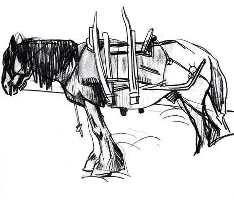 Les chevaux à l'île de Batz portaient des charges comme le goémon avec un bât comme sur ce dessin de Mathurin Méheut