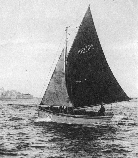 Le cotre M 1993  rentre au port de Roscoff par bon vent de suroit sous trinquette et grand-voile à un ris