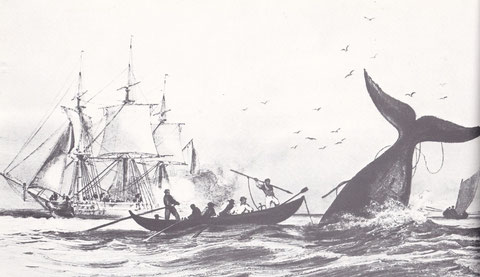 Le patron de la pirogue achève une baleine à coup de lance, le harponneur est passé à l'arrière et dirige la pirogue avec l'aviron de queue