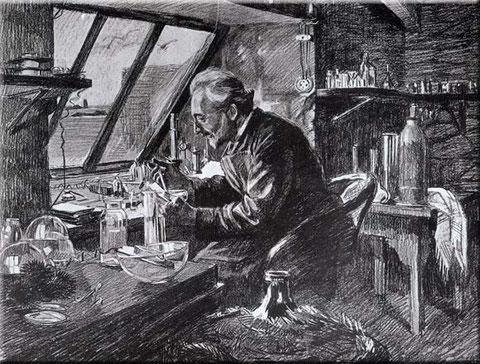 Le professeur Yves Delage dans son laboratoire, dessin de Mathurin Méheut
