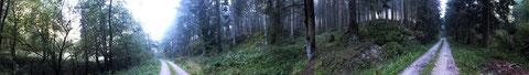 Waldwege in Brilon/HSK)