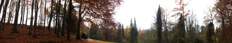 Wald in Randringhausen/Bünde