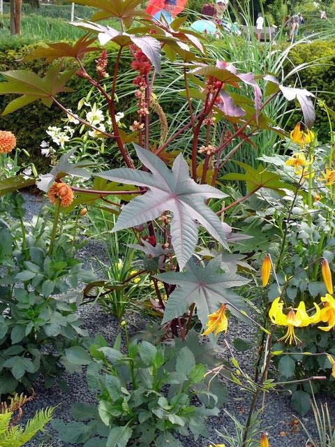 """Wie """"Besonders"""" wirken Dahlie, Lilien und Gräser mit rotem Rizinus auf grauem Grund..."""