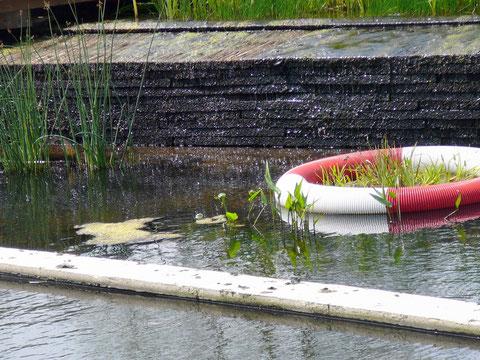 Filter-Stufe mit Wasserpflanzen