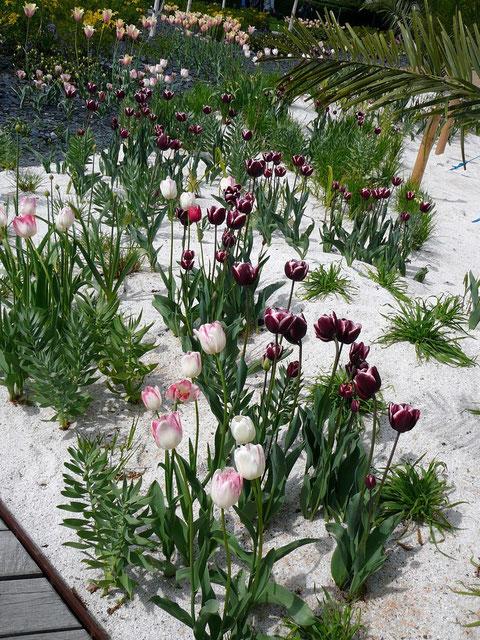 """Frühlingsblüten an """"australischen"""" Stränden"""